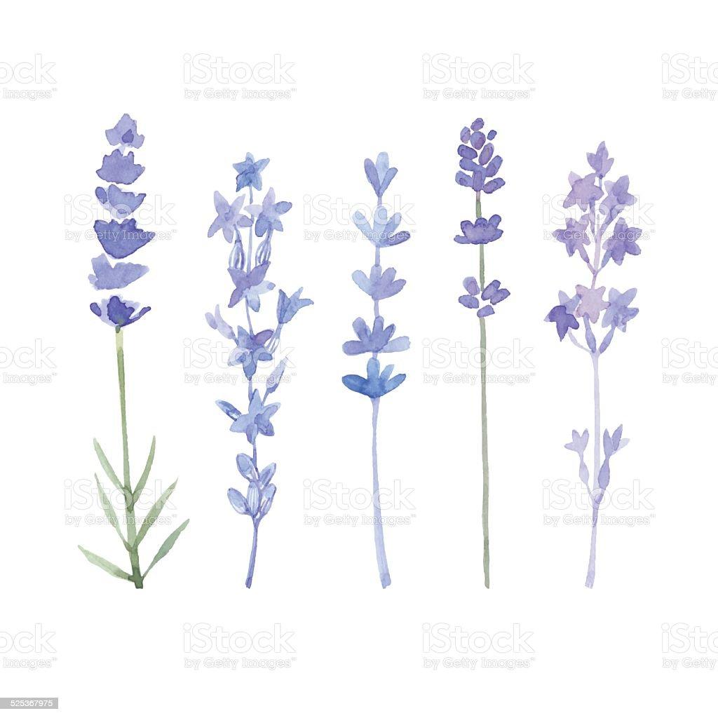 royalty free lavender clip art vector images illustrations istock rh istockphoto com lavender clipart png lavender clipart images