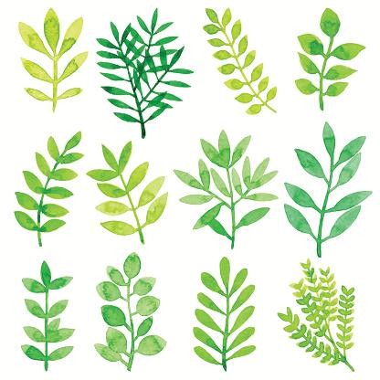 Watercolor Leaves Green
