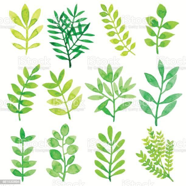 Watercolor leaves green vector id661530894?b=1&k=6&m=661530894&s=612x612&h=eyjf5sbvw iyenlrnz jvhivcx6ubbafftg4ikqkxqq=