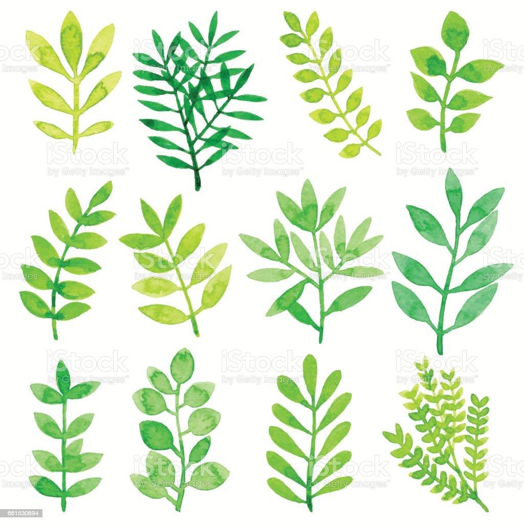 Aquarel bladeren groenvectorkunst illustratie