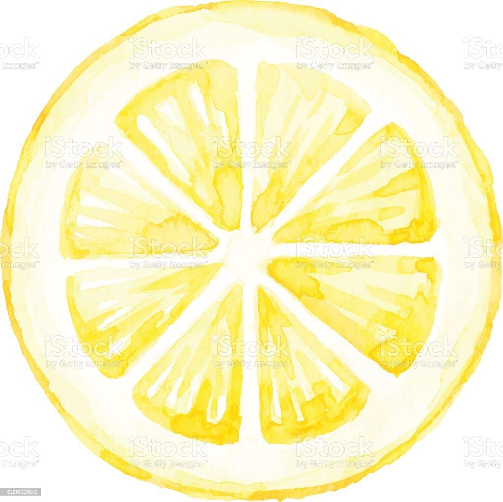 Watercolor Lemon Slice vector art illustration