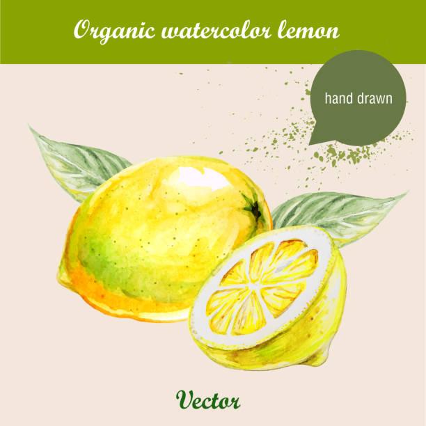 stockillustraties, clipart, cartoons en iconen met watercolor lemons. hand drawn illustration - fresh start yellow