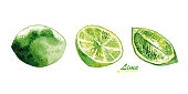 Watercolor lime and lime slices. Hand painted realistic illustration on paper. Vintage design eco natural food fruits isolated on white background.