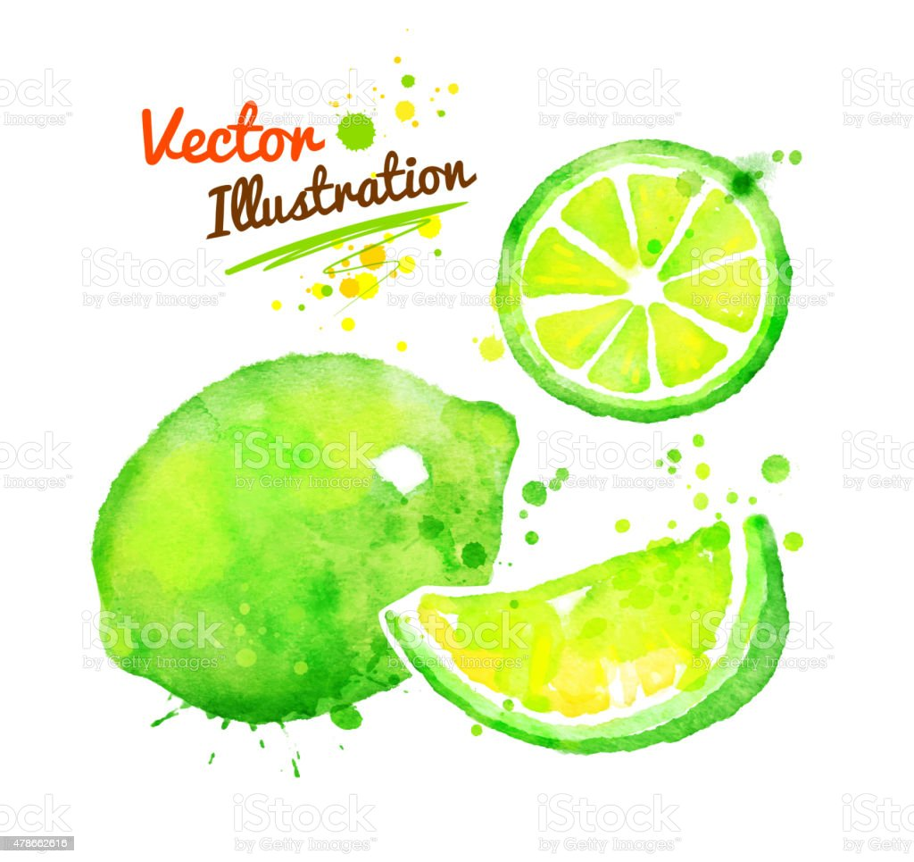 Watercolor lime. vector art illustration