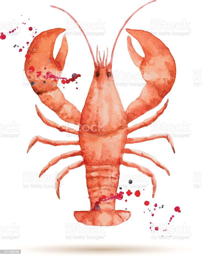 Watercolor lobster. vector art illustration