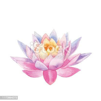 Vector illustration of Water Lily.