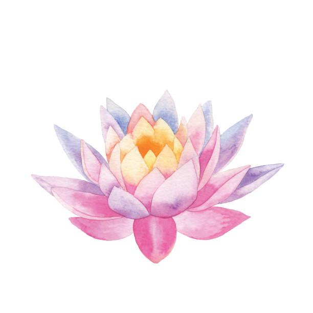 ilustrações, clipart, desenhos animados e ícones de lótus da aguarela - lotus