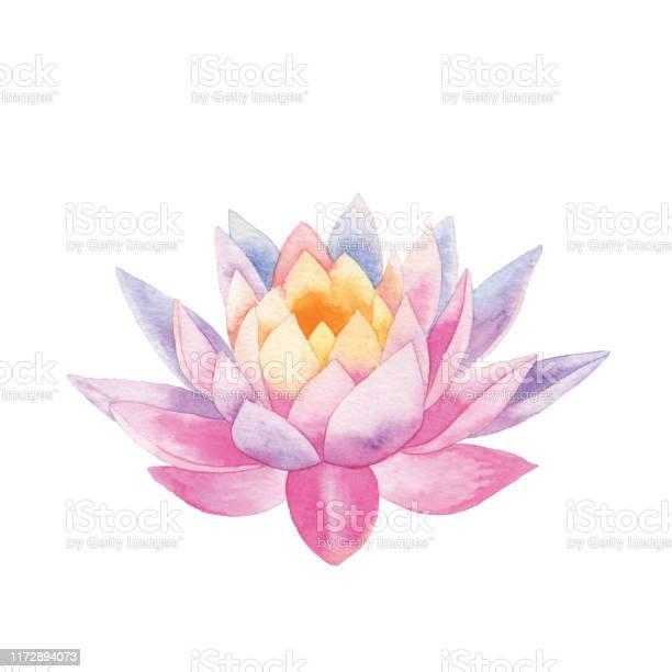 Aquarel Lotus Stockvectorkunst en meer beelden van Abstract