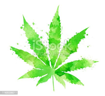 istock Watercolor marijuana leaf 1163036011