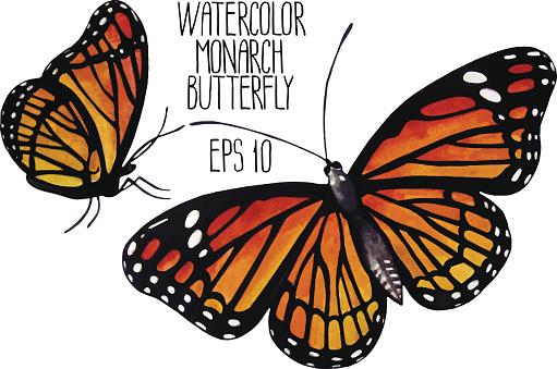 Watercolor monarch butterflies