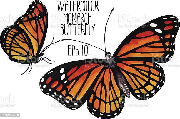 Watercolor monarch butterflies vector id470266678?b=1&k=6&m=470266678&s=612x612&h=aczxcy2qr69fnmylgnl1dvyothqtn5s4xkwow9yybmw=