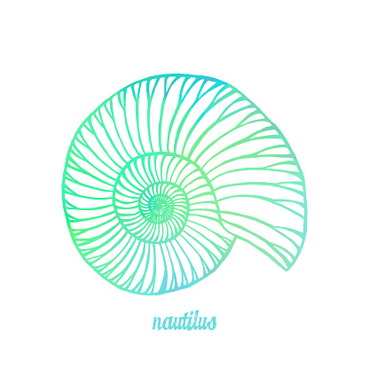 Watercolor Multi Colored Nautilus Isolated. Hand Painted Clip Art Design Element for Labels, Business Cards, Flyers.