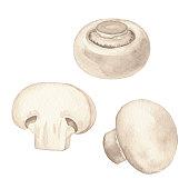 Vector illustration of white mushrooms.