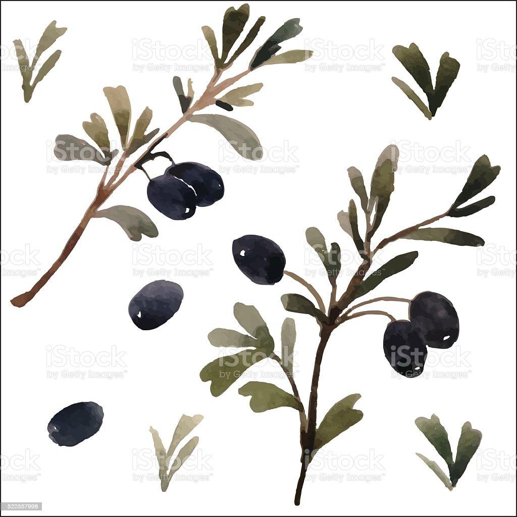 watercolor olive branch, vector vector art illustration