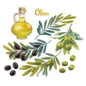 Watercolor green and black olives on the branches. Olive oil in the glass bottle. Hand painted natural design