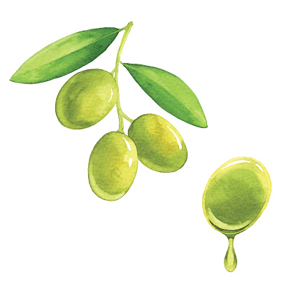 Watercolor Olives