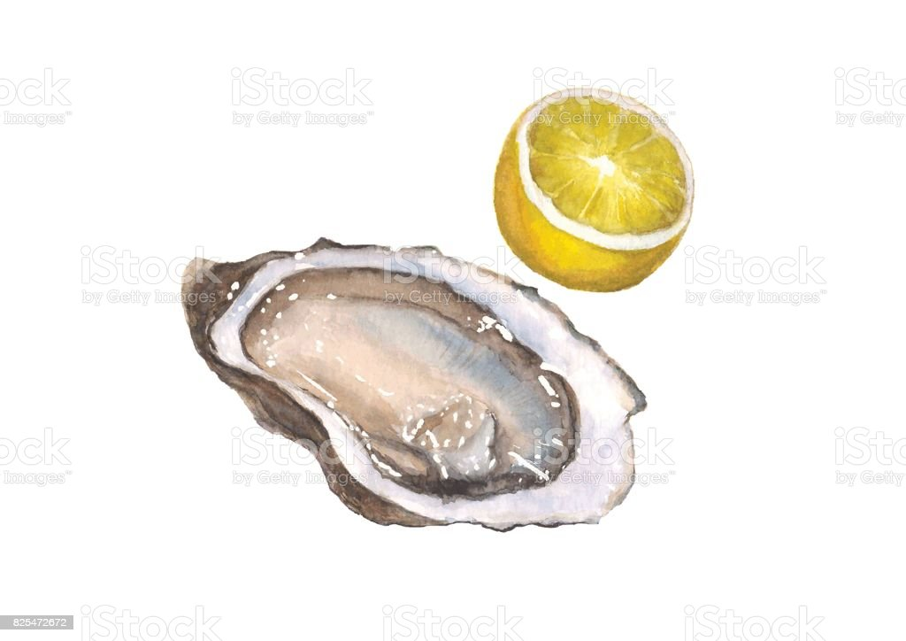 Watercolor oyster and lemon, isolated on white vector art illustration