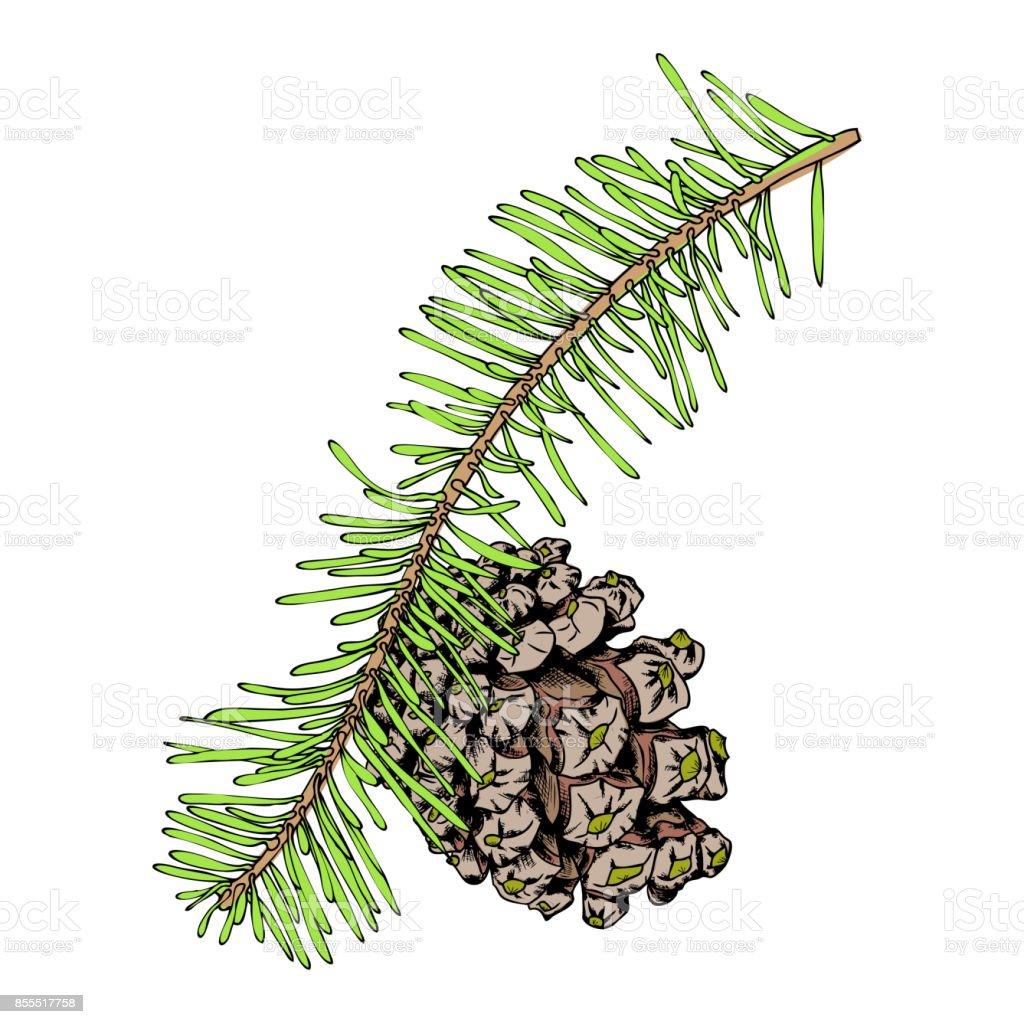 Sulu Boya Boyalı Ve Elle çizilmiş Ağaç Dalı Imitasyon çam Kozalağı