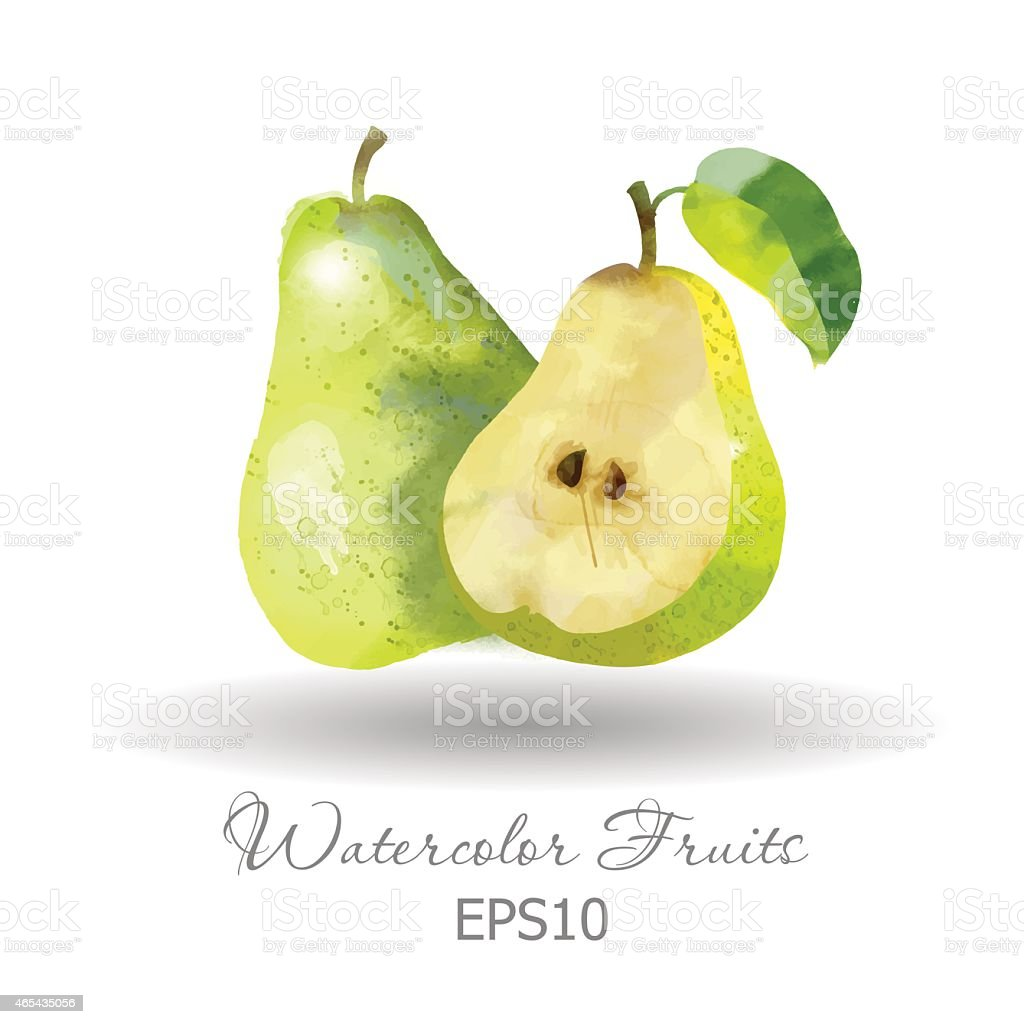 Watercolor painting of a pear and a half vector art illustration