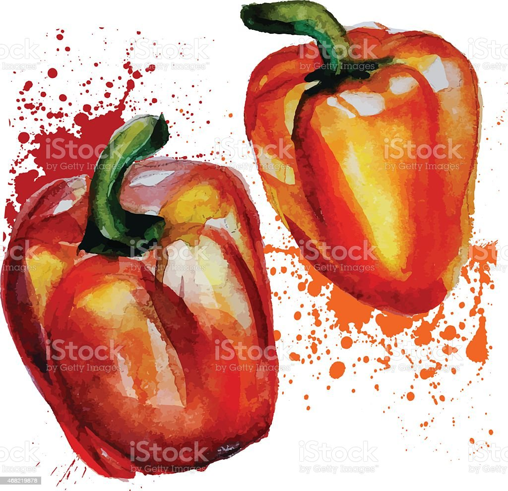 Watercolor painting of two red peppers on white background vector art illustration