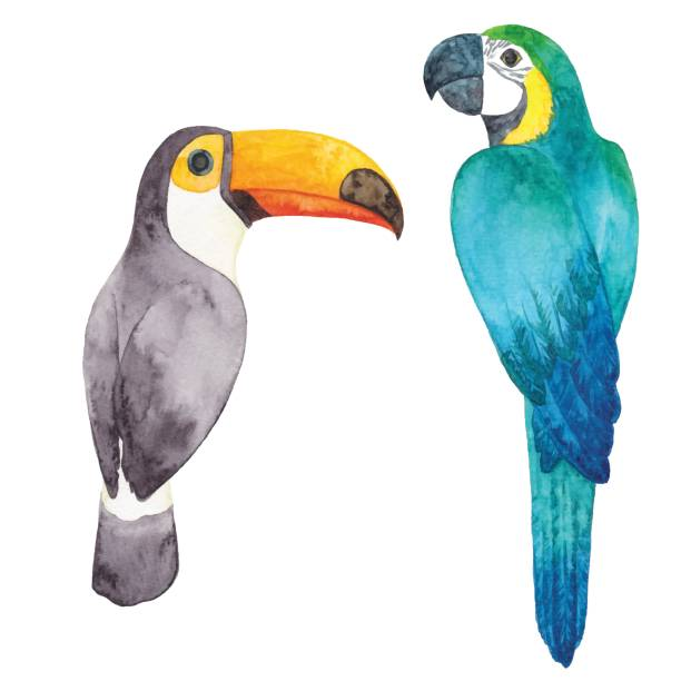 watercolor parrot and toucan - exotic animals stock illustrations