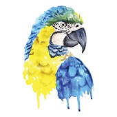 Vector watercolor parrot portrait