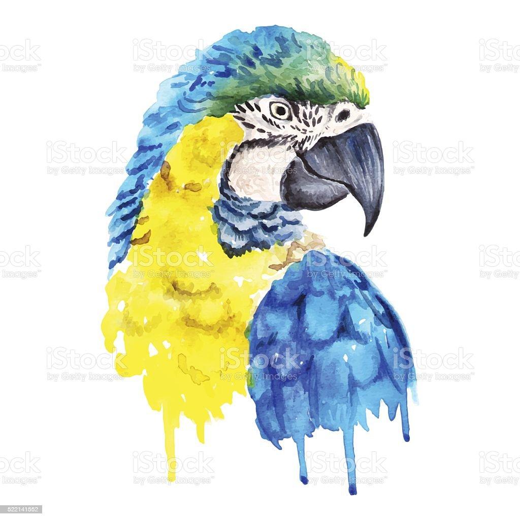 Watercolor parrot portrait vector art illustration