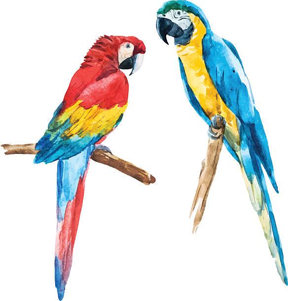 ilustrações de stock, clip art, desenhos animados e ícones de papagaio de aguarela - arara