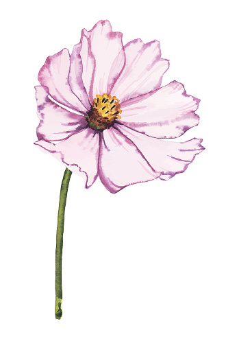 Watercolor pastel-colored flower vector illustration