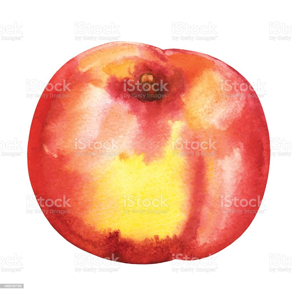 Watercolor peach fruit closeup isolated vector art illustration