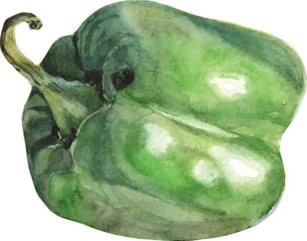 ilustrações de stock, clip art, desenhos animados e ícones de pimenta de aguarela - red bell pepper isolated