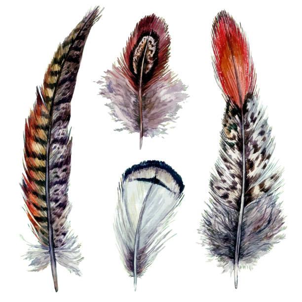 Watercolor Pheasant Feathers vector art illustration