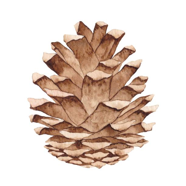 watercolor pine cone - holidays and seasonal background stock illustrations