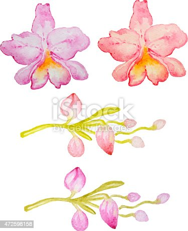 Vector watercolor hand drawn pink and red orchids