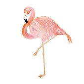Watercolor Pink Flamingo Portrait, Side View. Tropical Exotic Bird Background, Tropical Summer Concept, Design Element.
