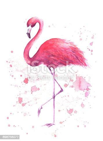 istock Watercolor pink flamingo 898258072