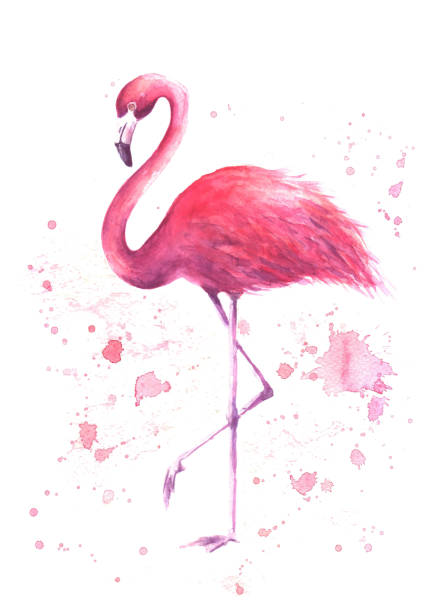 stockillustraties, clipart, cartoons en iconen met aquarel roze flamingo - afrikaanse vogel