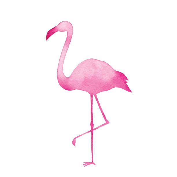 watercolor pink flamingo - flamingo stock illustrations