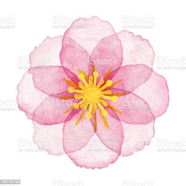 Watercolor pink flower vector id941757740?b=1&k=6&m=941757740&s=612x612&h=ftzwp8hczyhdphkdp39rhpghktfa0kmeswc0xotjv8y=