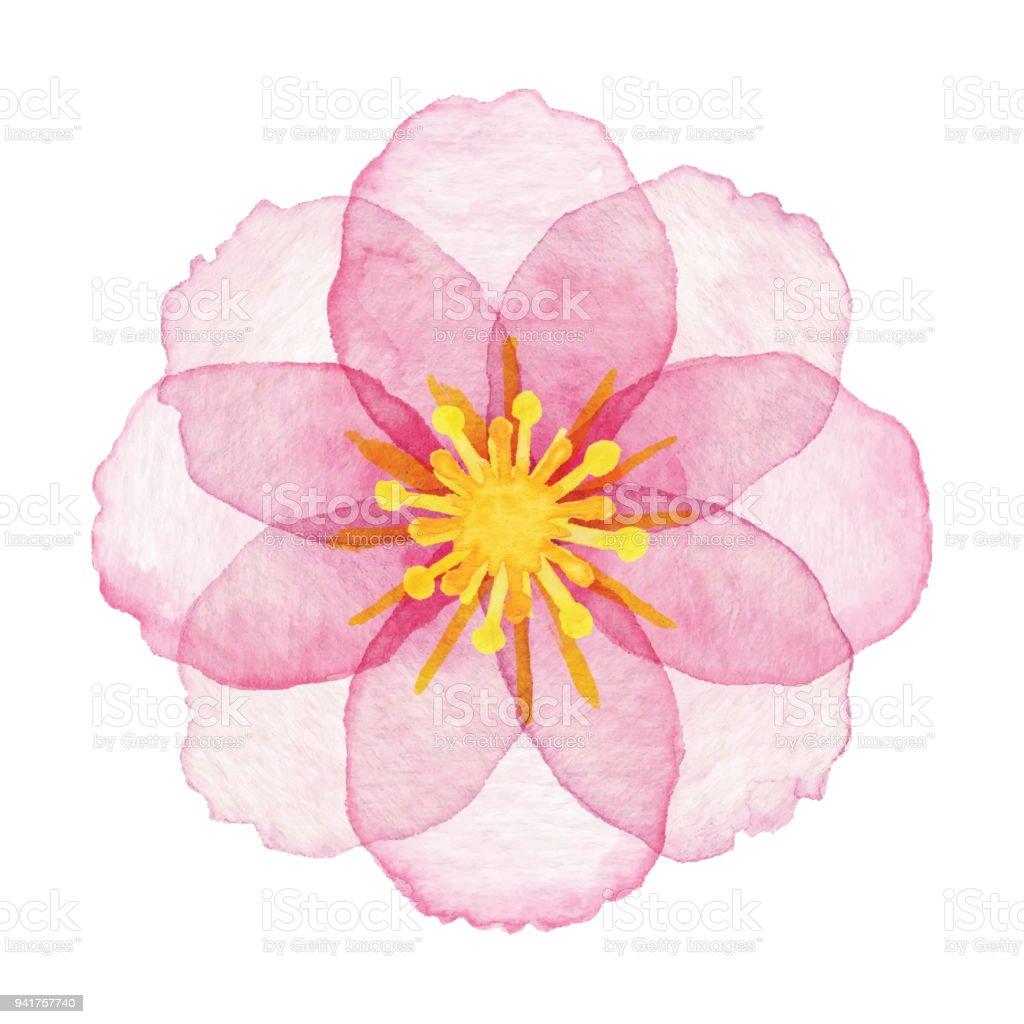Watercolor Pink Flower vector art illustration