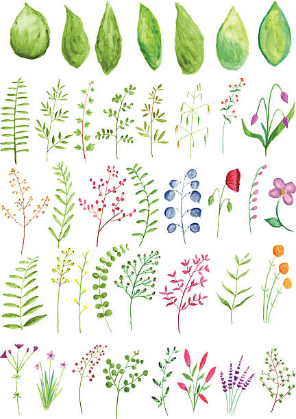 watercolor plants and branches - wildflowers stock illustrations, clip art, cartoons, & icons
