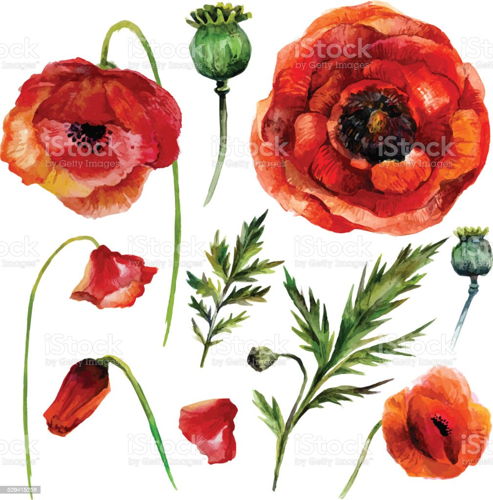 Watercolor Poppies Set. vector art illustration