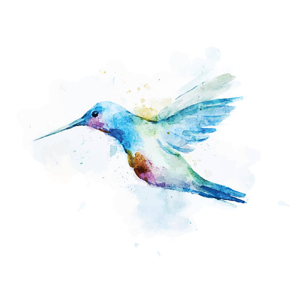 watercolor portrait of a colibri bird on a white background - hummingbird stock illustrations