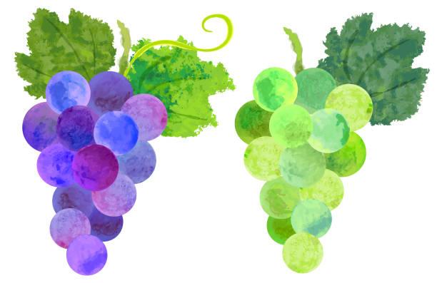 水彩紫と緑のブドウ - マスカット イラスト点のイラスト素材/クリップアート素材/マンガ素材/アイコン素材