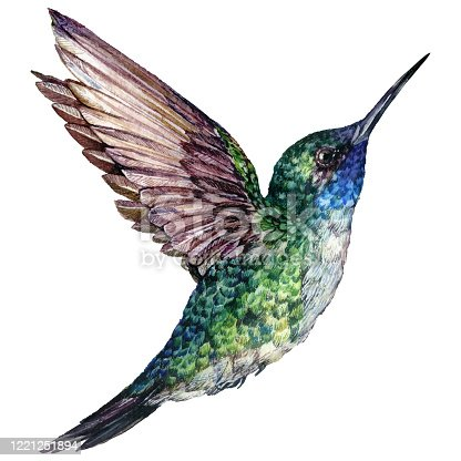 istock Watercolor Realistic Illustration of Flying Hummingbird 1221251894