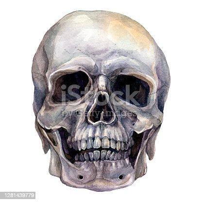 istock Watercolor Realistic Illustration of Human Skull 1281439779