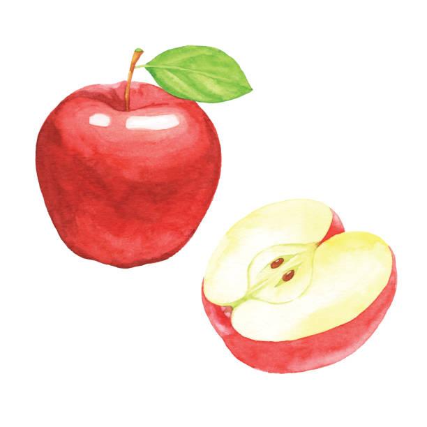 illustrazioni stock, clip art, cartoni animati e icone di tendenza di watercolor red apples - mela