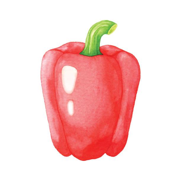 ilustrações de stock, clip art, desenhos animados e ícones de watercolor red bell pepper - red bell pepper isolated