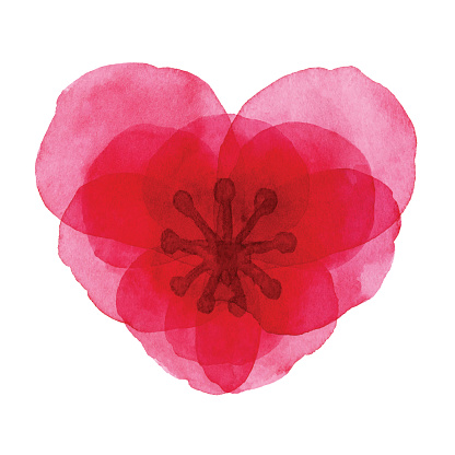 Watercolor Red Heart Shaped Flower