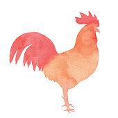 Vector illustration of red chicken.